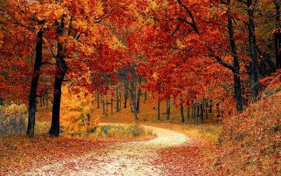 Autumn Focus